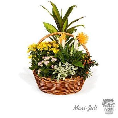 Ref.FMJ0013.Cesta de Mimbre con Plantas en tonalidades verdes y amarillos.