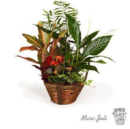 Ref.FMJ0009.Cesta de Mimbre con Plantas en tonalidades verdes y anaranjados.