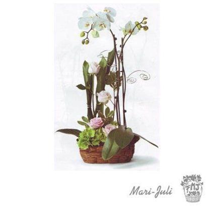 Ref.ES5MIM.Planta Orquídea Phalaenopsis rosas Blancos con base.