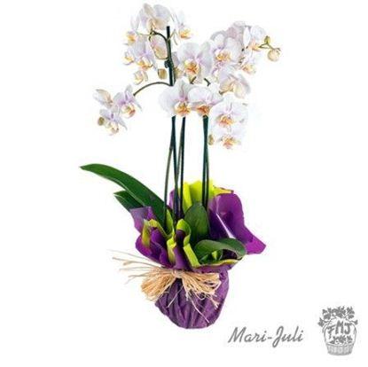 Ref.P0005.Orquideas de tres varas Tahiti