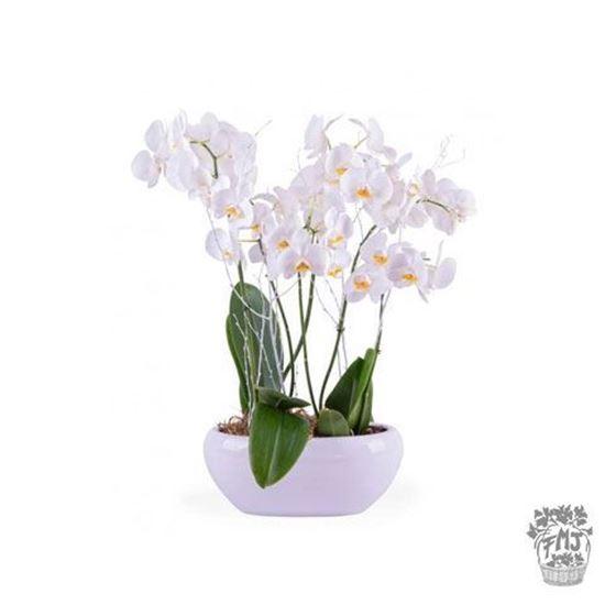 Imagen de  Ref.FMJ0124.Planta Regalo Blanca.
