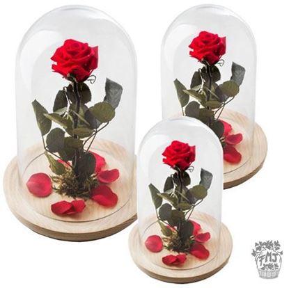 Ref.FMJ0130. Rosa encantada del amor eterno.(a partir de 15€)